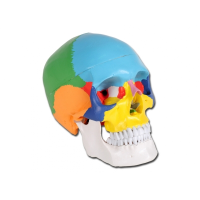 VALUE HUMAN SKULL - 1X - 3 díly - barevné