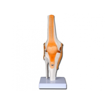 VALUE KNEE JOINT