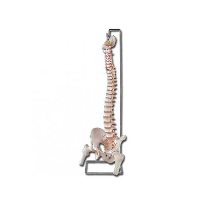 FLEXIBILNÍ VERTEBRÁLNÍ STĹPEC s otevřenou křížovou kostí femuru